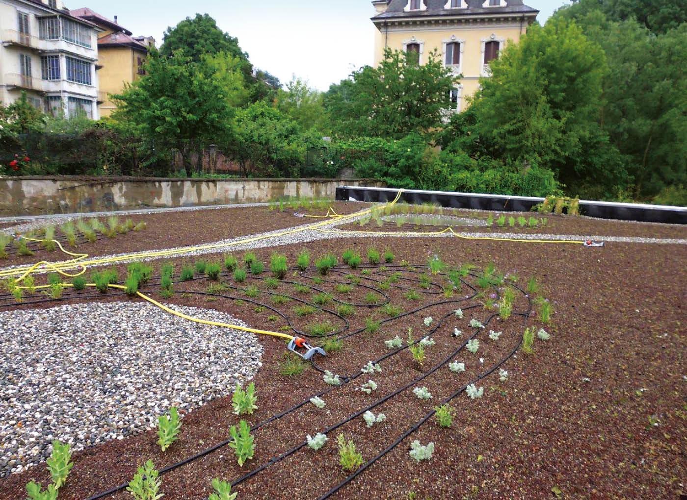 argilla-espansa-giardini-pensili-agrileca-P43-14