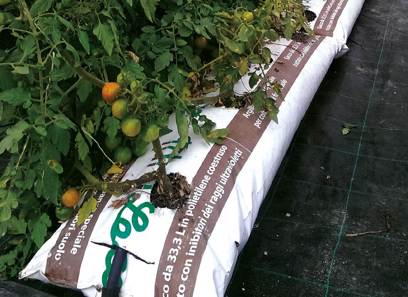 idroleca-coltivazioni-fuori-suolo-P46-2