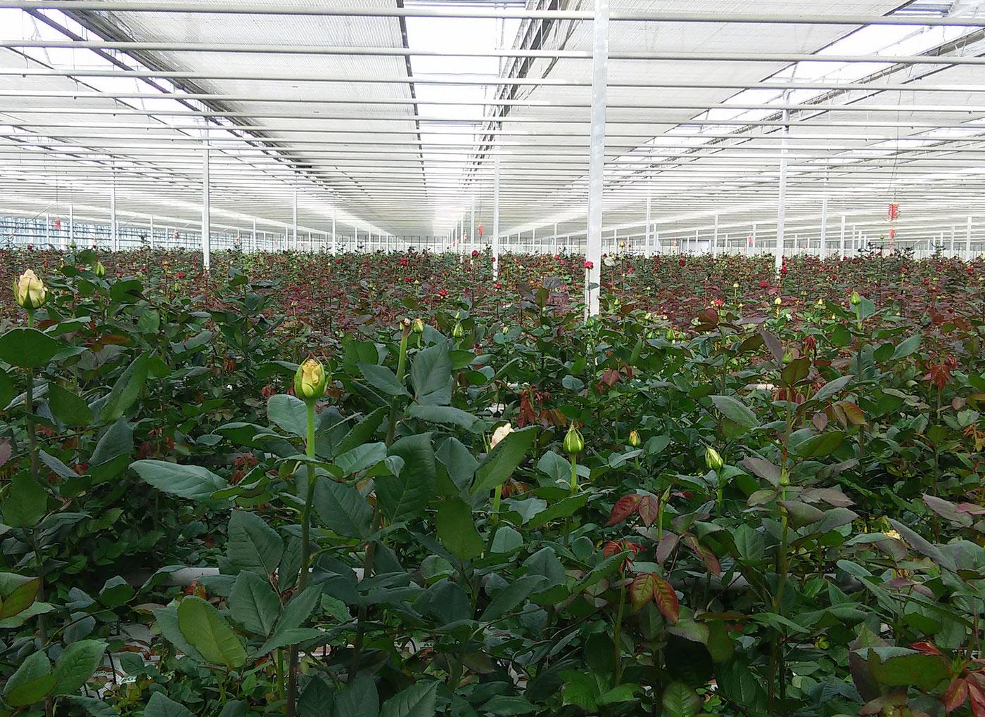idroleca-coltivazioni-fuori-suolo-P46-6