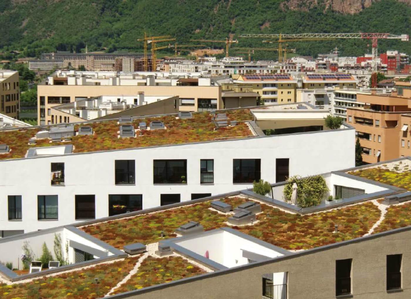 tetto-verde-copertura-AE12